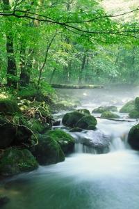 ruisseau rivière faisant son chemin dans la forêt