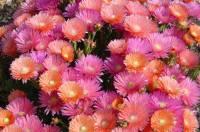 010601-fleurs3.jpg