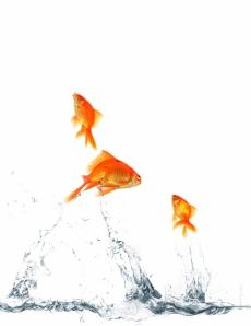 3 poissons qui sortent du commun
